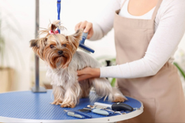 Pet grooming blog