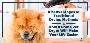 Disadvantages of Traditional Dog Drying Methods