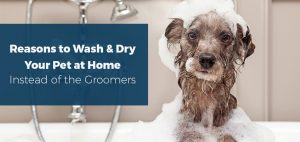 Reasons to Wash & Dry Your Pet at Home