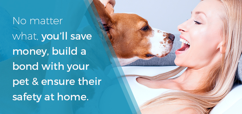 Save money and build a bond with your dog