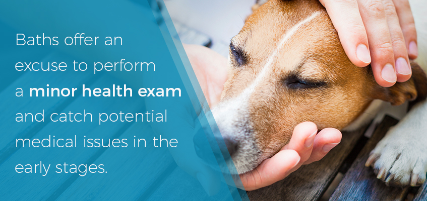 Do a health exam when you bathe your dog
