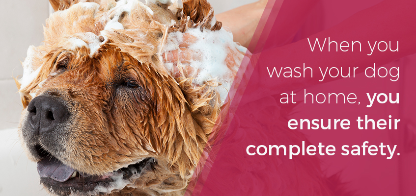 Ensure your dogs safety and groom at home