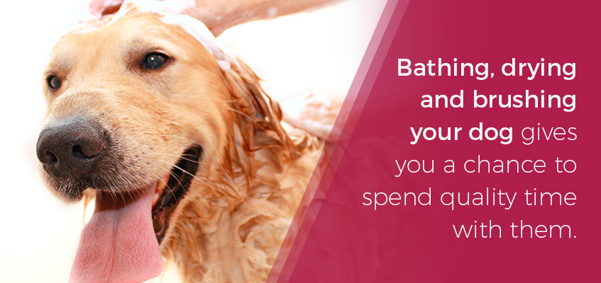 Bonding with your dog during grooming
