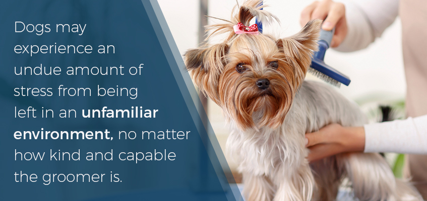 An unfamiliar environment may cause your dog stress