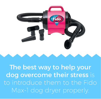 Learn how to use a dog dryer properly