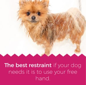 Use one hand to restrain your dog