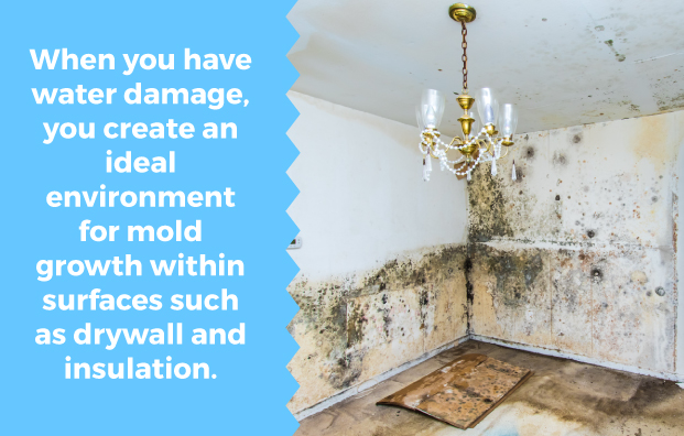 Water damage creates an ideal environment for mold