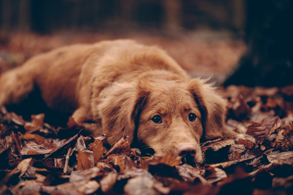 Pet care in autumn