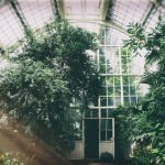 Greenhouse Temperature Control: How To Cool Your Greenhouse In Summer